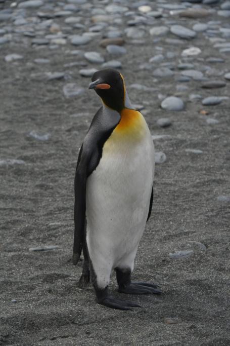 Antarctique - Page 2 Dsc_7119