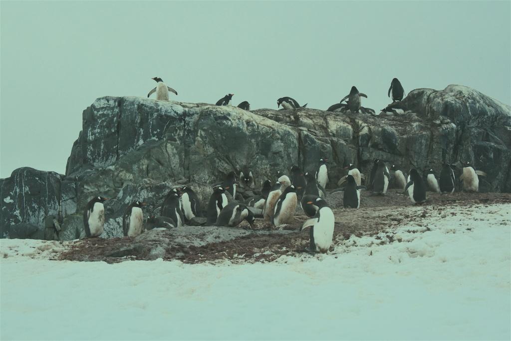 Antarctique - Page 3 Dsc_7413