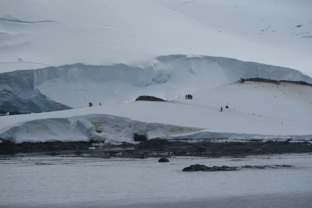Antarctique - Page 3 Dsc_7510