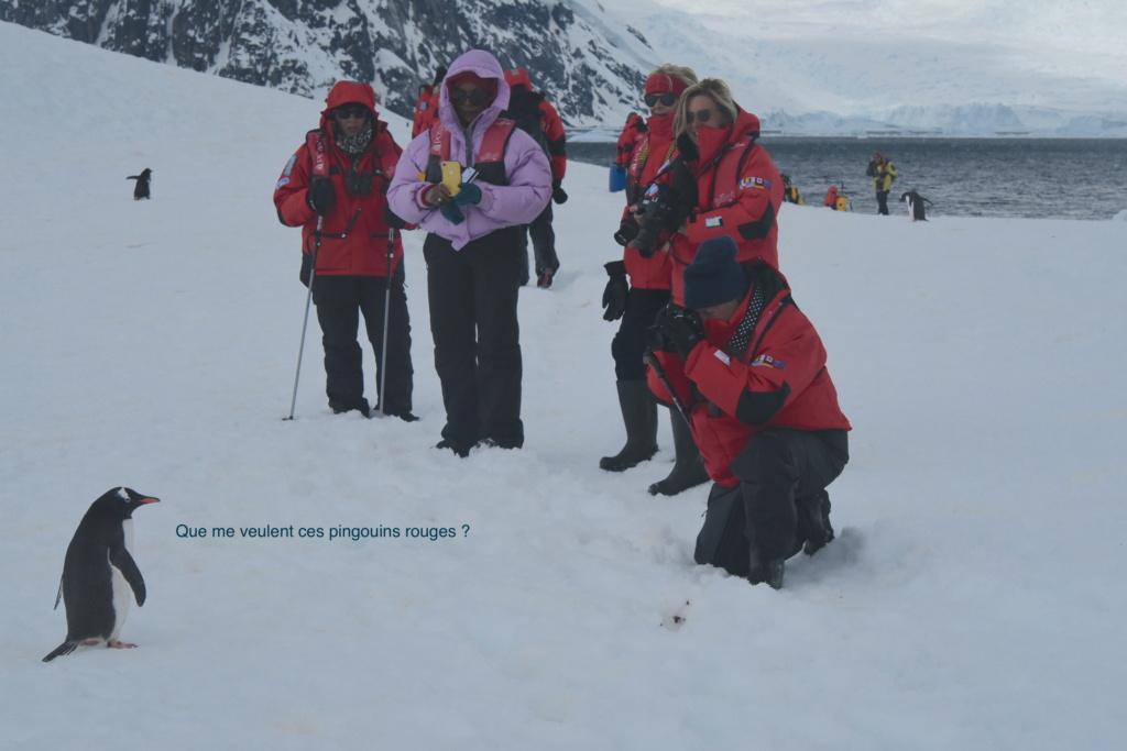 Antarctique - Page 4 Dsc_7611