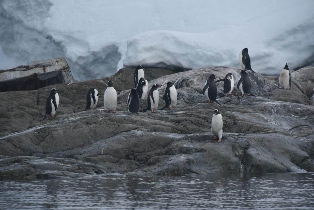 Antarctique - Page 4 Dsc_7616