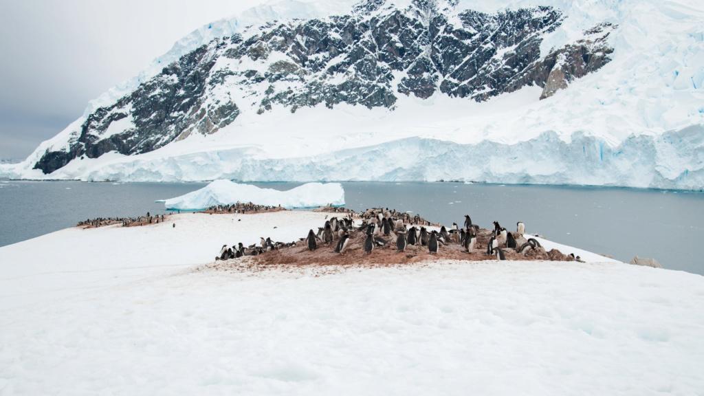 Antarctique - Page 4 N-200121