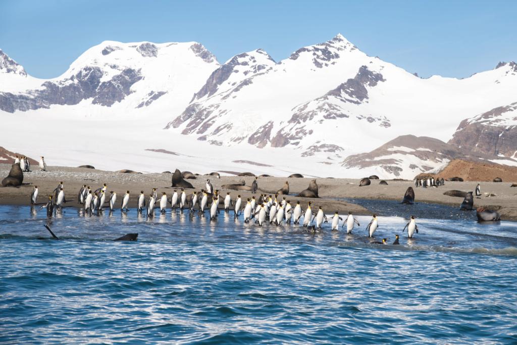 Antarctique - Page 2 N-200218