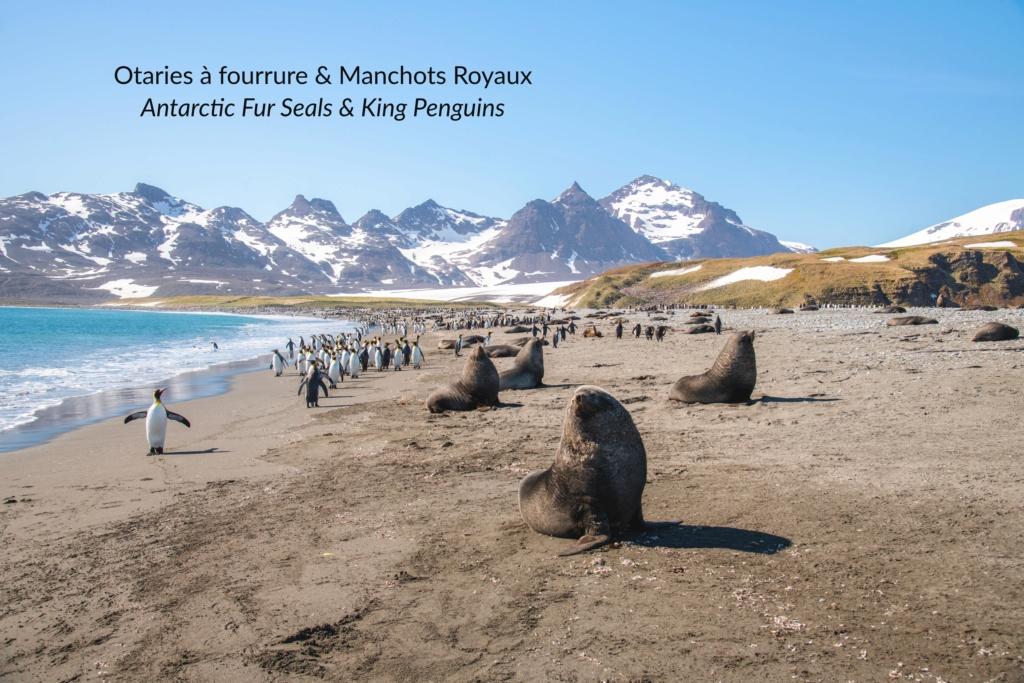Antarctique - Page 2 N-200219