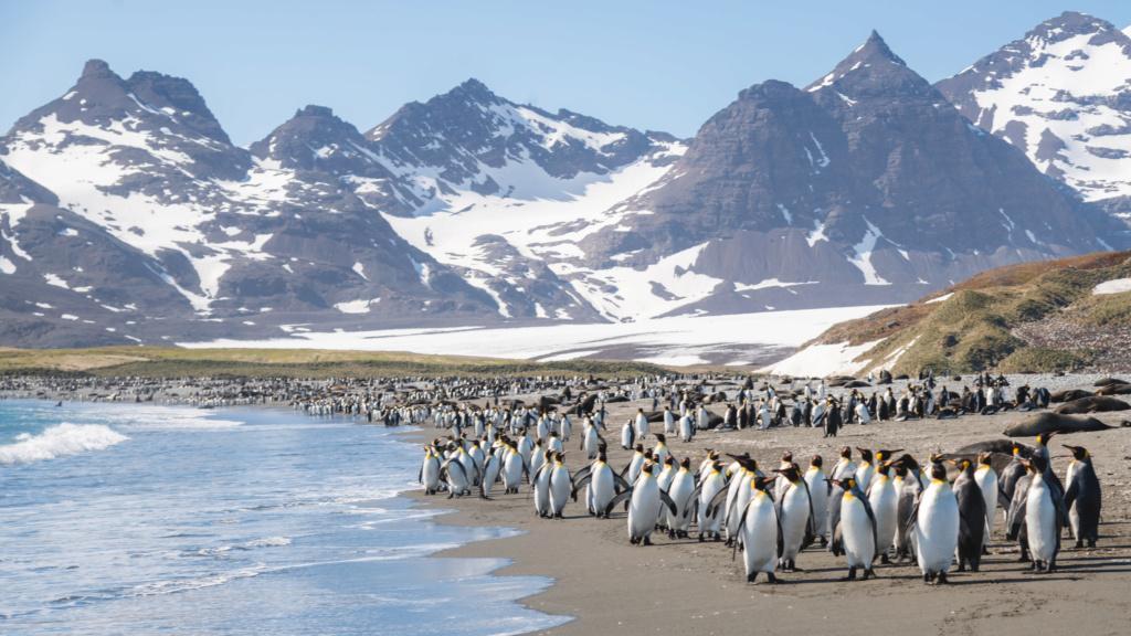 Antarctique - Page 2 N-200221