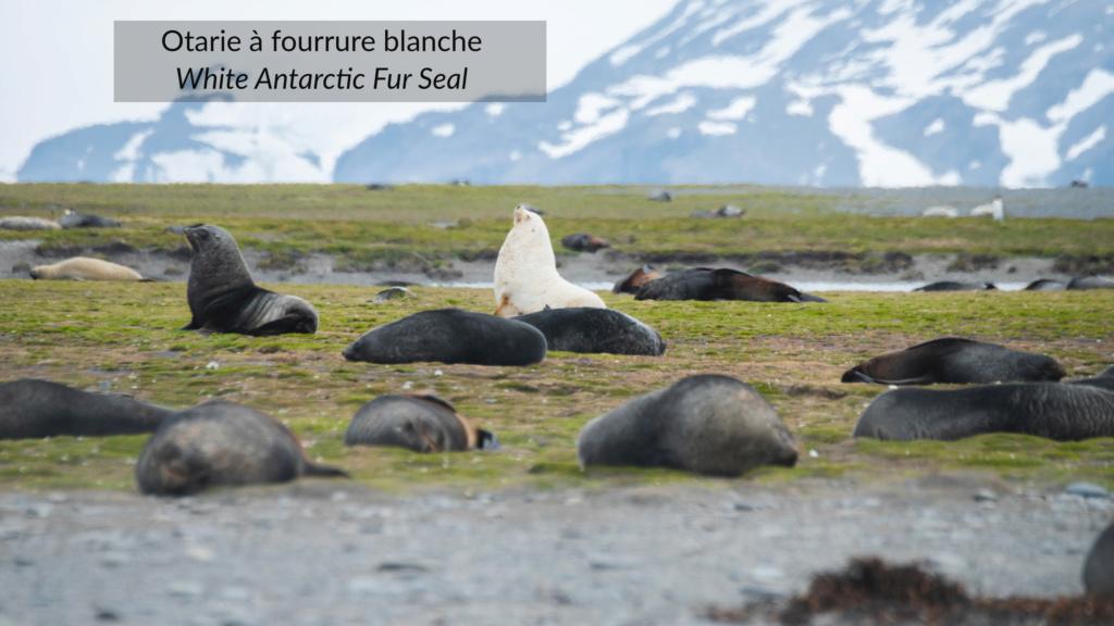 Antarctique - Page 2 N-200314