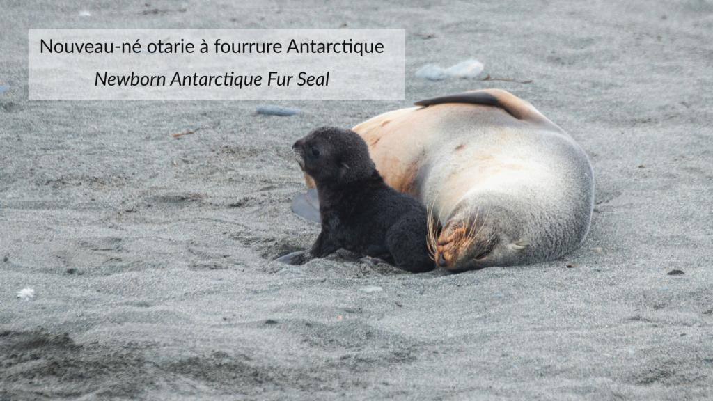 Antarctique - Page 2 N-200317