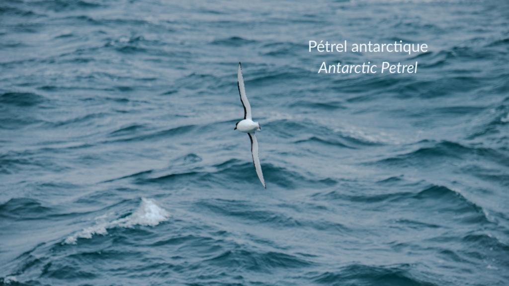 Antarctique - Page 2 N-200613