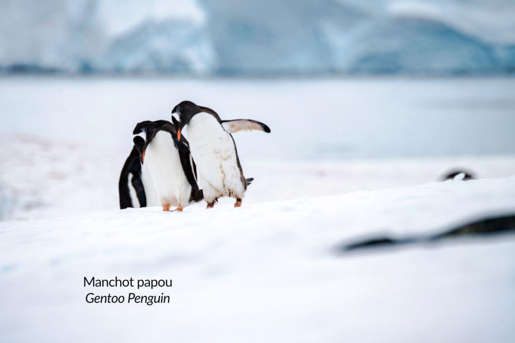 Antarctique - Page 3 N-200812