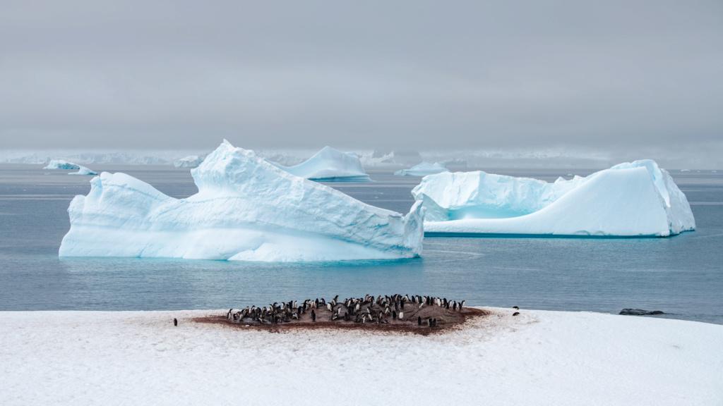 Antarctique - Page 3 N-200815