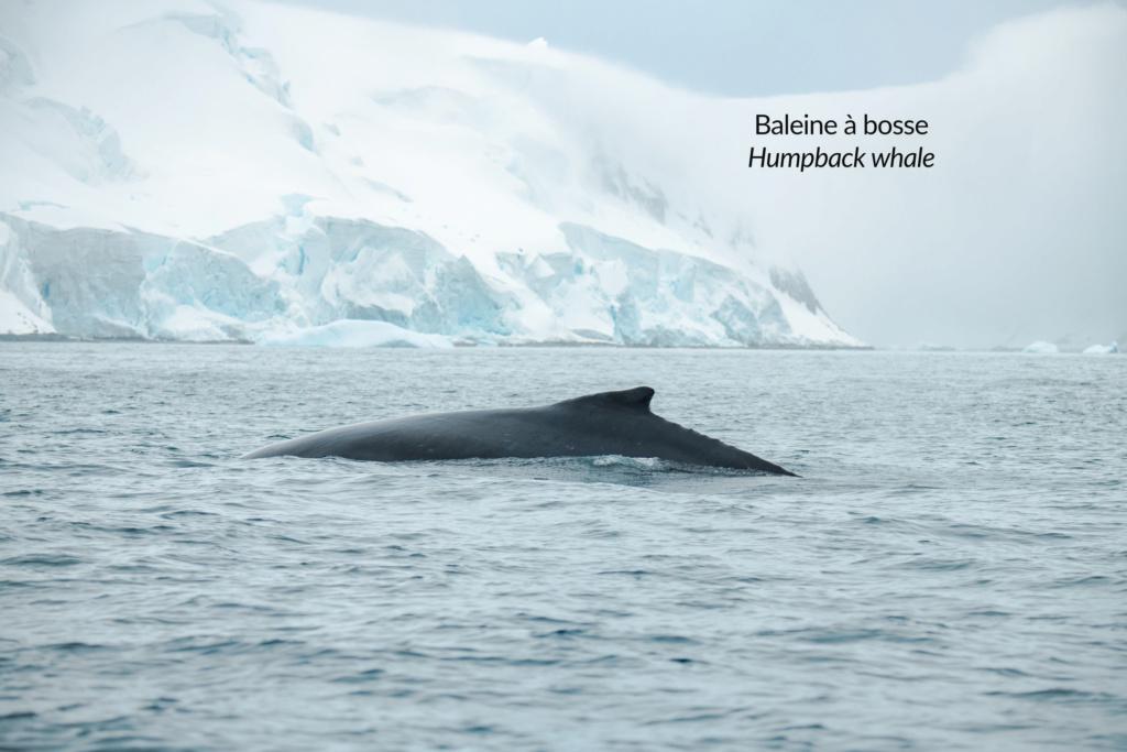 Antarctique - Page 3 N-200911