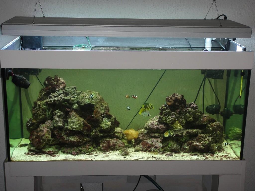 fabrication meuble aquarium siporex  Dsc01810