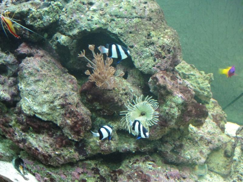 fabrication meuble aquarium siporex  Dsc01812