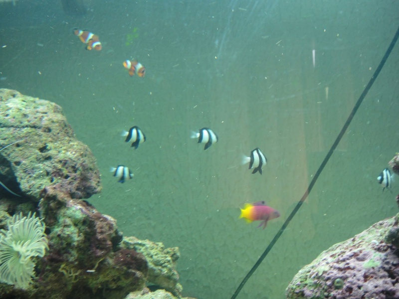 fabrication meuble aquarium siporex  Dsc01814
