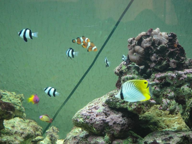 fabrication meuble aquarium siporex  Dsc01815