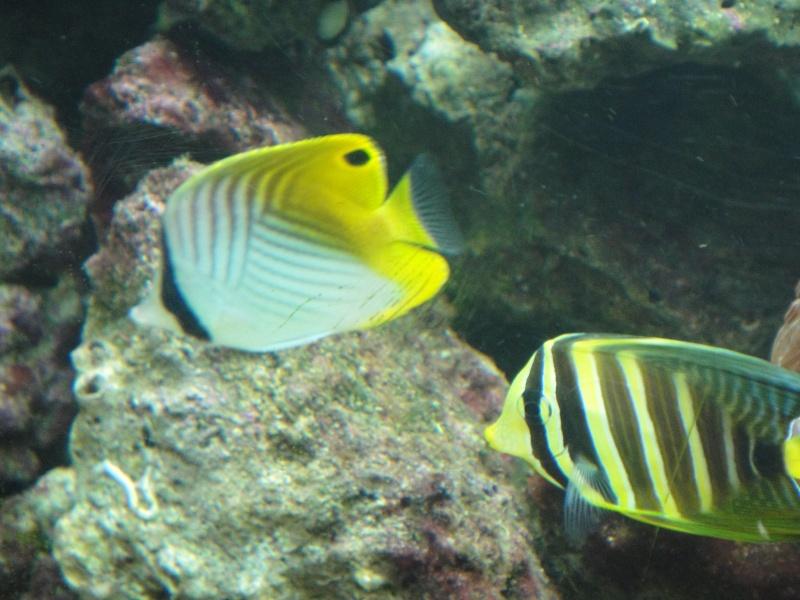 fabrication meuble aquarium siporex  Dsc01816