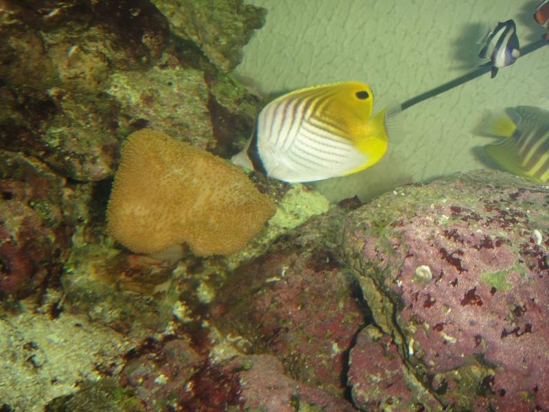 fabrication meuble aquarium siporex  Dsc01818