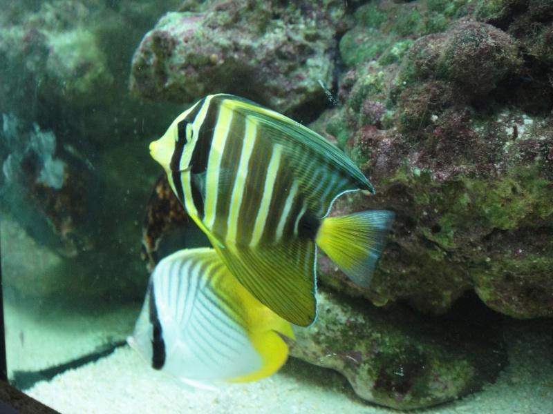 fabrication meuble aquarium siporex  Dsc01819