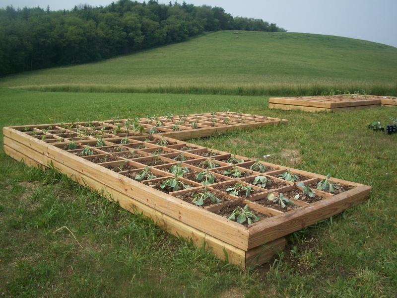 My Square Foot Garden - Version 2 100_0311