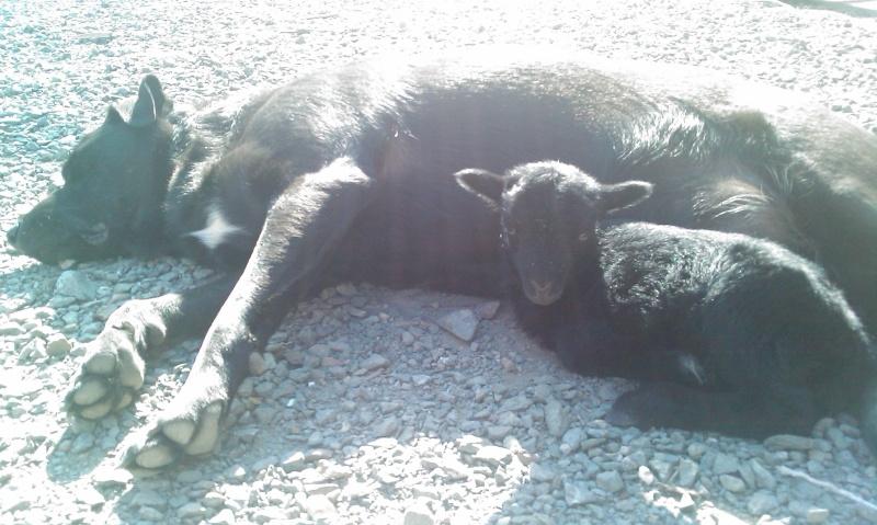papa loup et son bébé chat Imag0011