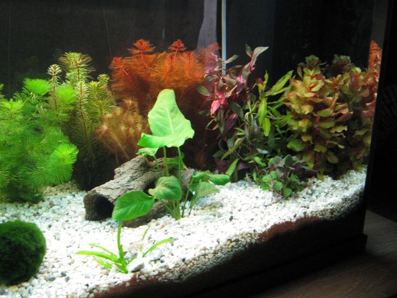 plante15.jpg