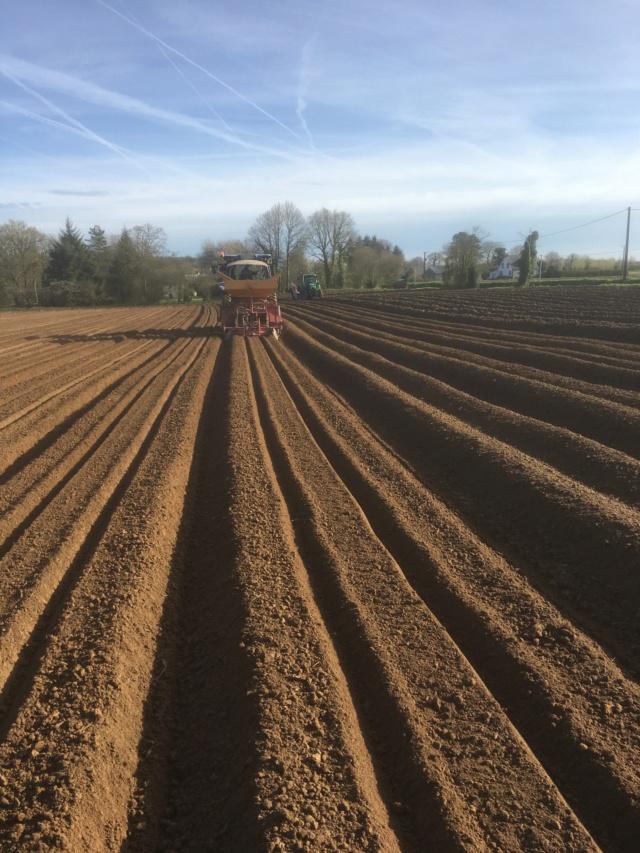 Évolution des cultures de pommes de terre 2019 - Page 2 Planta11