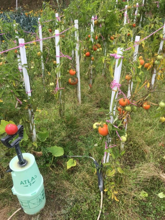 mon jardin en permaculture Planta13
