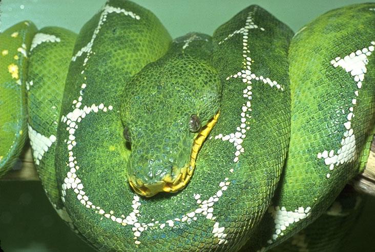 petit quiz serpent  0117110
