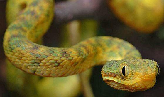 petit quiz serpent  0626210
