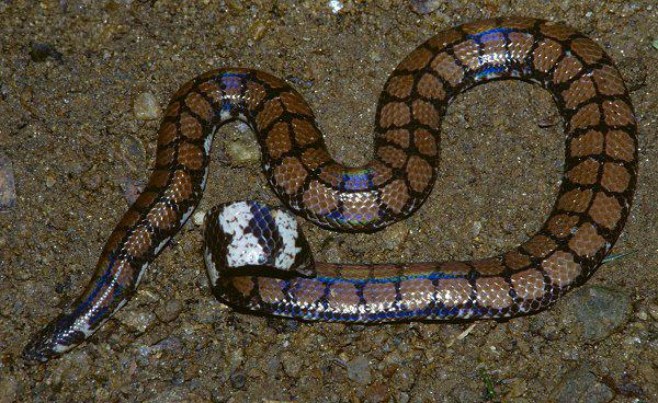 petit quiz serpent  0917110