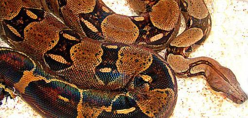 petit quiz serpent  Bv000010