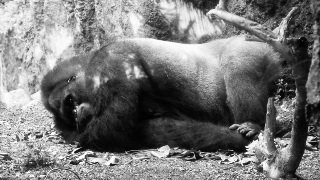 Un petit tour au Zoo Fullsi10