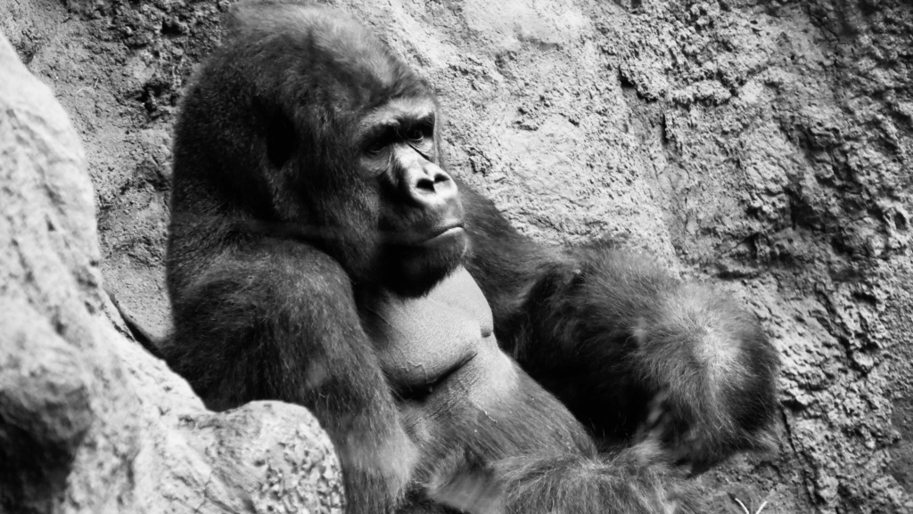 Un petit tour au Zoo Fullsi11