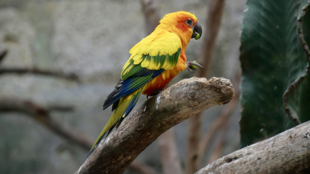 Un petit tour au Zoo Fullsi13