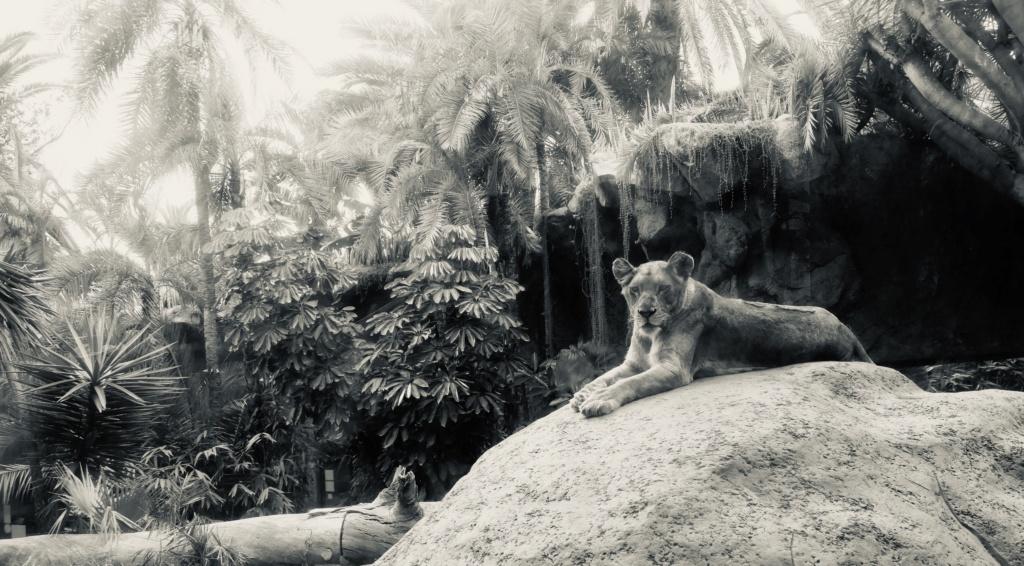 Un petit tour au Zoo Fullsi16