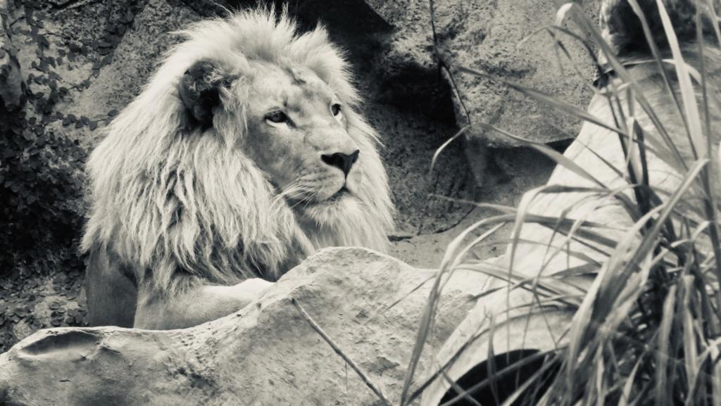 Un petit tour au Zoo Fullsi17