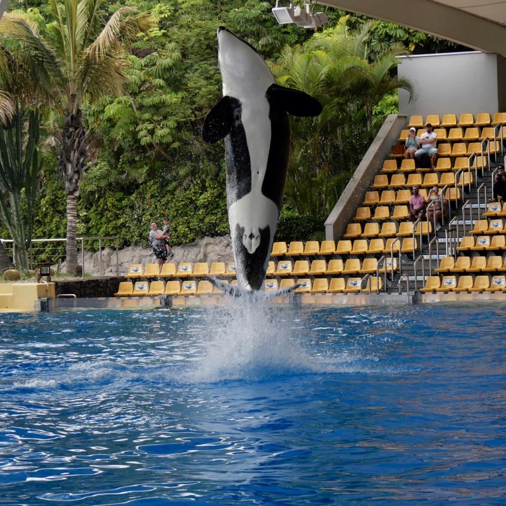 Un petit tour au Zoo Fullsi18