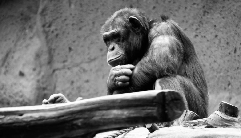 Un petit tour au Zoo Fullsi20