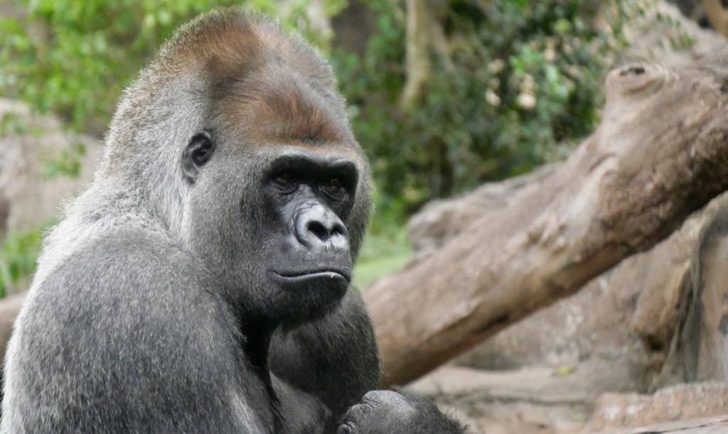 Un petit tour au Zoo Fullsi21