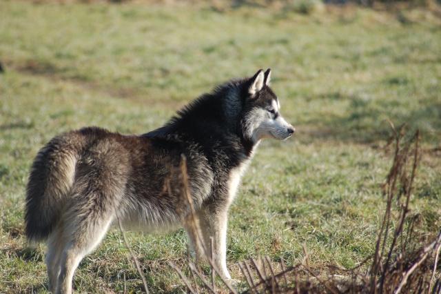 Nos loups grandissent, postez nous vos photos - Page 4 Dsc_0010