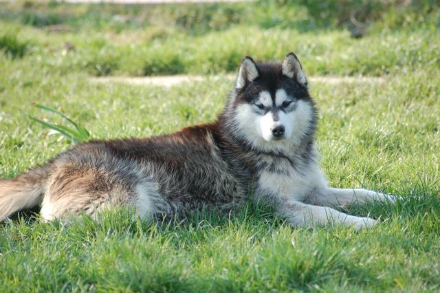 Nos loups grandissent, postez nous vos photos - Page 4 Dsc_0110