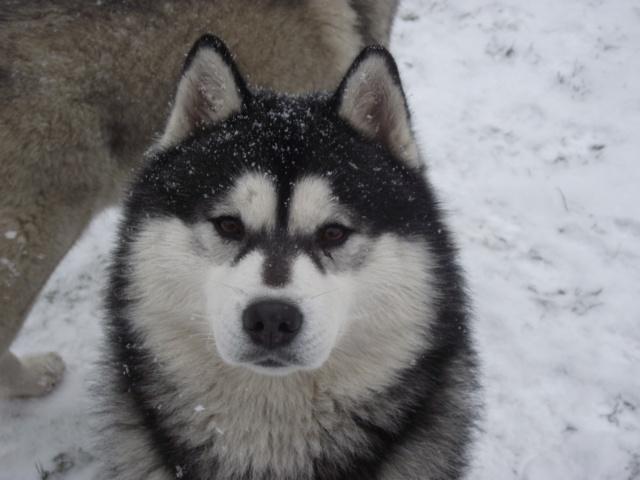 Nos loups grandissent, postez nous vos photos - Page 4 Dscf0110