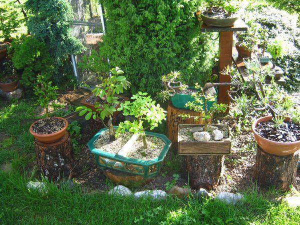 Dove coltiviamo i nostri bonsai - Pagina 2 3410