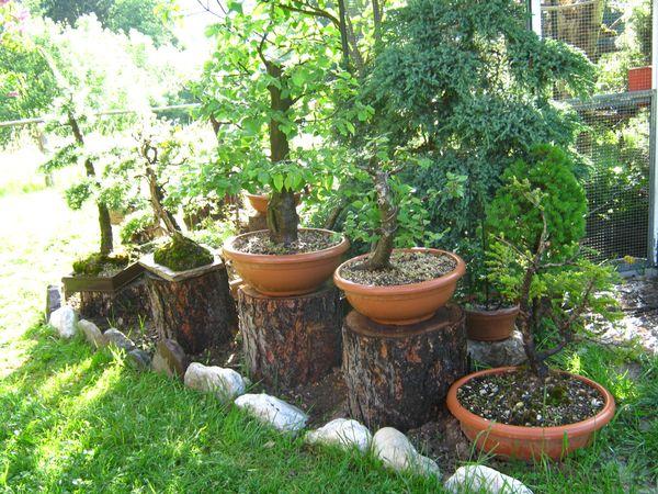 Dove coltiviamo i nostri bonsai - Pagina 2 3510