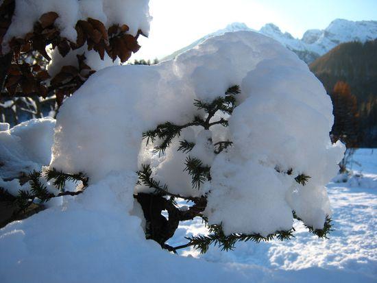 Bonsai sotto la neve Immagi10