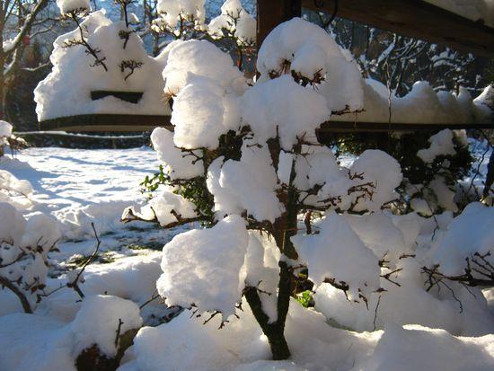 Bonsai sotto la neve Immagi13