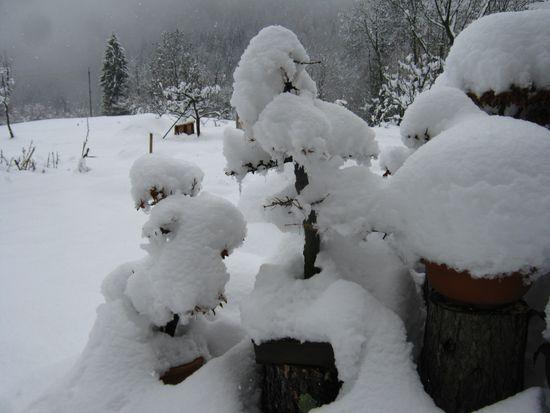 Bonsai sotto la neve Immagi15