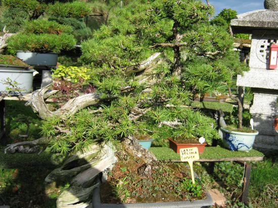 Per gli amanti del bonsai........ Immagi34