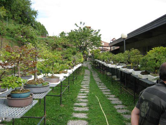 Per gli amanti del bonsai........ Immagi35