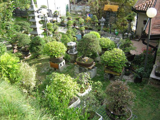 Per gli amanti del bonsai........ Immagi36